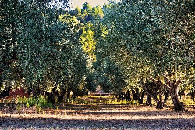 Ο εναλλακτικός τουρισμός είναι η έξυπνη μορφή διακοπών αγροτουρισμός