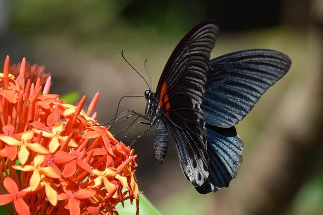 Μπαλί, ένας ειδυλλιακός προορισμός πεταλούδες