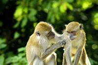 Μπαλί, ένας ειδυλλιακός προορισμός μαϊμούδες