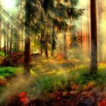 Η προστασία των δασών είναι ευθύνη μας
