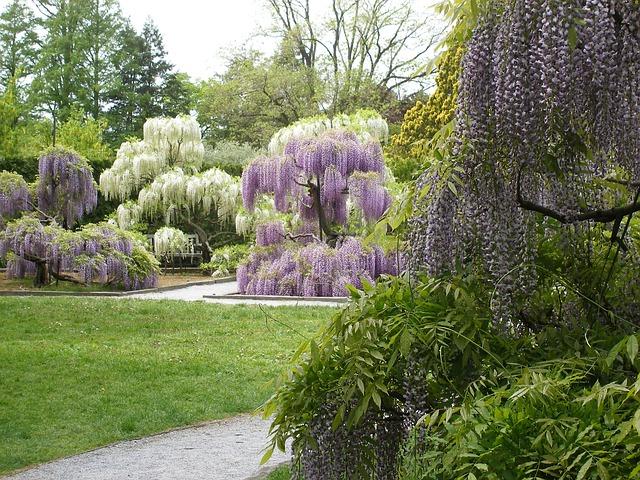 Οι μαγευτικοί κήποι της Ιαπωνίας φυτό