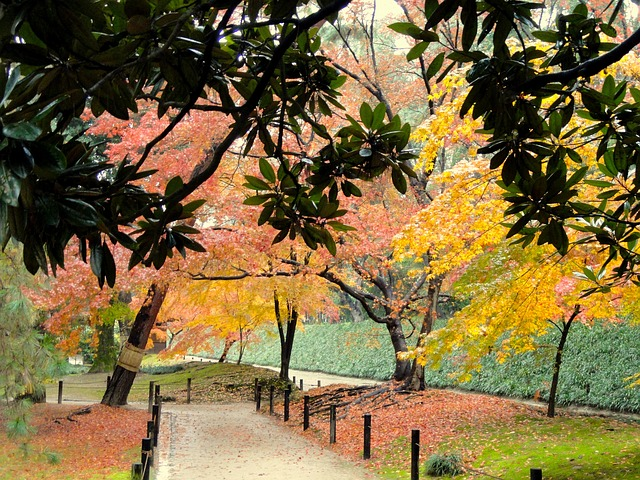 Οι μαγευτικοί κήποι της Ιαπωνίας δέντρα