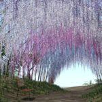 Οι μαγευτικοί κήποι της Ιαπωνίας