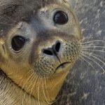 Είδη ζώων υπό την απειλή της εξαφάνισης