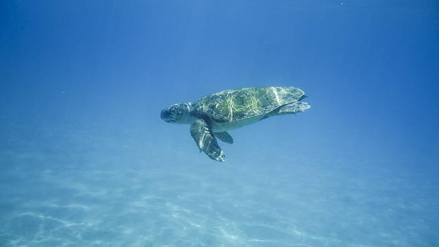 Είδη ζώων υπό την απειλή της εξαφάνισης θαλάσσια χελώνα
