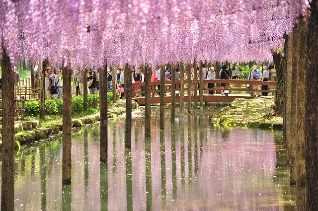 Οι μαγευτικοί κήποι της Ιαπωνίας γουιστέρια