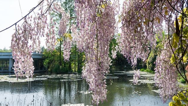 Οι μαγευτικοί κήποι της Ιαπωνίας λίμνη