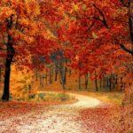 Φθινοπωρινές φωτογραφίες από διάφορα μέρη του κόσμου
