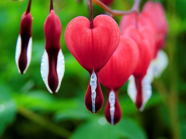 Σπάνια λουλούδια εξαιρετικής ομορφιάς