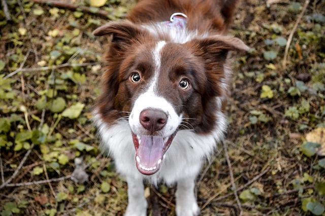 Οι πιο αστείες και παιχνιδιάρικες ράτσες σκύλων