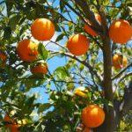 Το πορτοκάλι και οι πολύτιμες ιδιότητές του