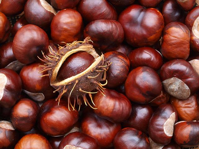 Κάστανο, ο θρεπτικός καρπός του χειμώνα