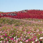 Το Hitachi Seaside Park της Ιαπωνίας