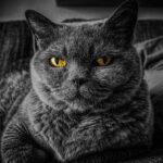 Γάτες: Δώδεκα διασκεδαστικές πληροφορίες