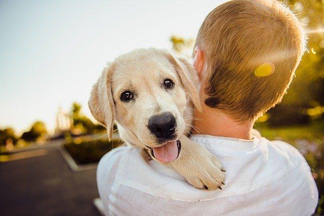 Χαμογέλαστε – Δεν είναι δύσκολο και υπάρχει τρόπος - Παιδί-Σκύλος