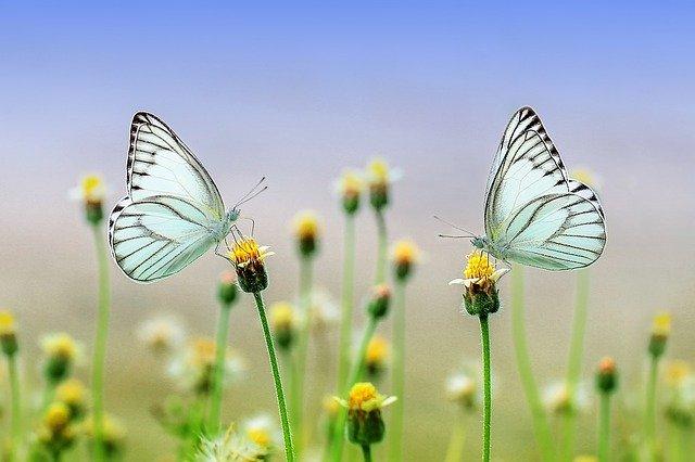 Οκτώ φωτογραφίες που θυμίζουν άνοιξη - Πεταλούδες