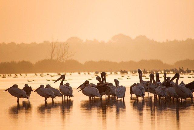 Οι πιο γνωστές μορφές εναλλακτικού τουρισμού - Οικολογικός τουρισμός