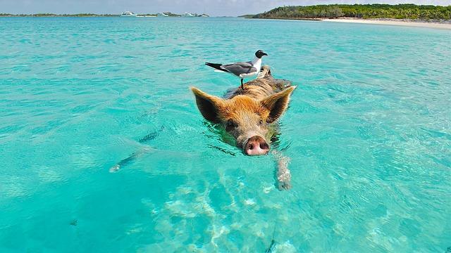 Οι διασημότερες παραλίες του κόσμου - Μπαχάμες